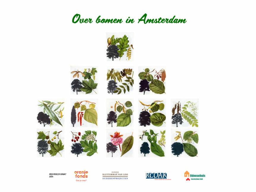 Over bomen in Amsterdam